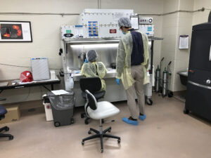 perinatal_immunobiology_05