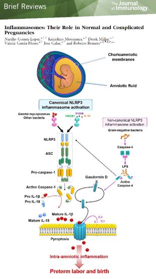 immunobiology_03